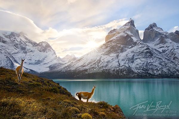 Patagonia guanaco image by Floris Van Breugel